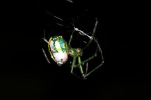 Orchard Orb Weaver after the rain by fractalfiend