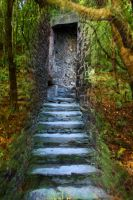 Forest Stairs 2 Stock by blaisedrew62