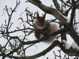 Winter Squirrel 2 by TheLittleCreature
