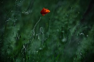Blow me away... by ildiko-neer