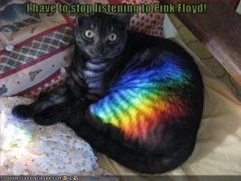 Pink Floyd Cat Moment by RingoStarr911