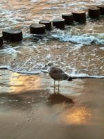 Seagull by MatthewGrimp