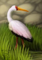 Mycteria ibis by jrtracey