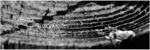 lines by FMpicturs