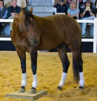 STOCK - 2014 Total Equine Expo-21 by fillyrox