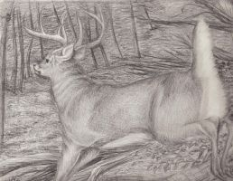 Deer by kimberly-castello