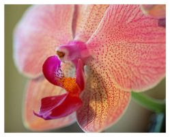 Yellow and Pink Spotted Orchid by Vamaena