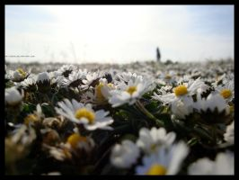Alone in Daisyworld by LotusGrisDesign