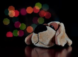 Sad dogie by omarrakeen