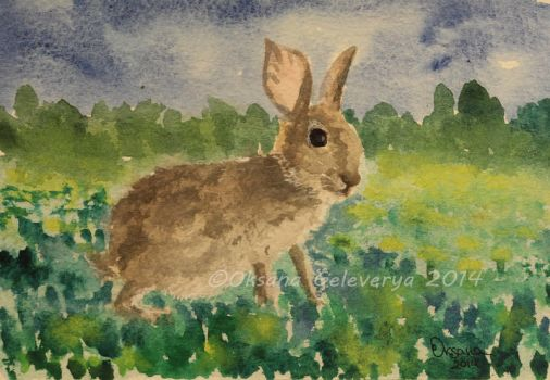 Watercolor and Ink #16 - Rabbit by Oksana007