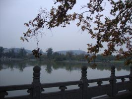 Autumn exploring - Tree and the lake by Laura-in-china