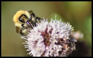 Bee on Purple Plant by Somebody-Somewhere