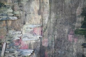 Texture 17 by Malleni-Stock