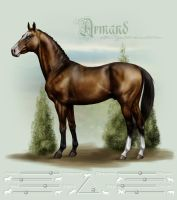 Armand by Tigra1988