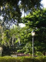 Rollins College Photography by Sasha41