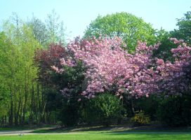 Blossom tree 2 by Kirsty2010dodgs