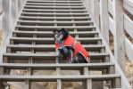 Stairway by ArcticPug