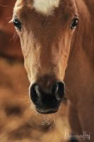 Foals portraits 03 by MsCarmen