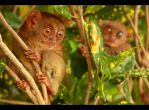Smallest Primate by theambivalentmind