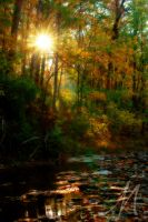 Golden Dreams by InLightImagery