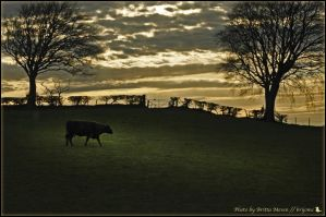 scottish evening Landscape by brijome