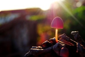Fungi by AnaRosaPhotography