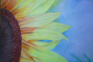 sunflower by mady95