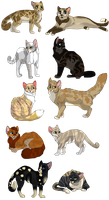 10 Adopt Cats 1 by MlSTY