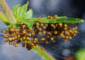 Spiderlings by Yawn-Monster