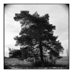 2014-331 My friends, the trees - scan0107 by pearwood