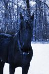 Ice Friesian 01 by MeetMeAtTheLake2Nite