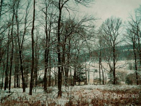 Wooded View by Circle2Creations