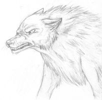 Snarling wolf sketch by orxlen
