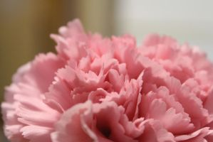 Pink Flower 3 by Accyber