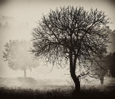 trees on the fog by aykanozener