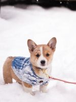 Risu in the Snow by KBeezie