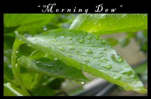 Morning Dew by NRoberts93