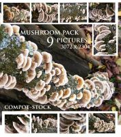 mushroom pack by compot-stock