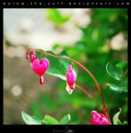 Bleeding Hearts II by below-the-surf