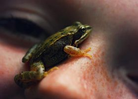 Frog by Maquenda