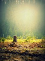Fog in the forest by EricaOscura