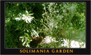 Solimania Garden by opelman