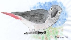 Grey Parrot In Guache by The-Shire
