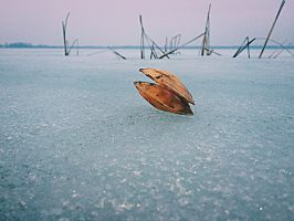 Clamshell on frozen lake's surface by Thordval