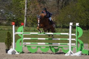 Chestnut Horse - Show Jumping stock - 11.13 by MagicLecktra