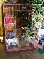 New bird cage by kaceymears