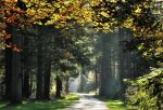 Once again on the autumnal morning road by jchanders