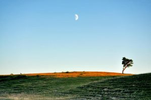The Tree and the Moon by ErikTjernlund