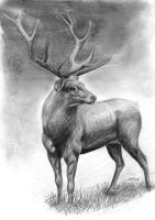 Stag by silima13