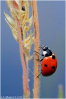 Lady Bird by andy-j-s